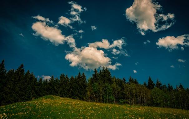 Фото обои лес, небо, трава, облака, деревья, цветы