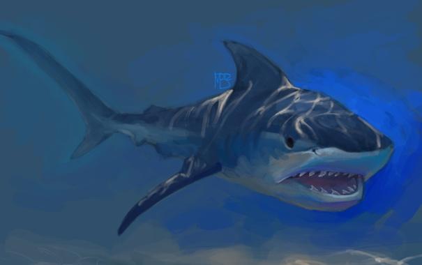 Фото обои солнечные лучи, под водой, рыба, пасть, арт, акула, хищник