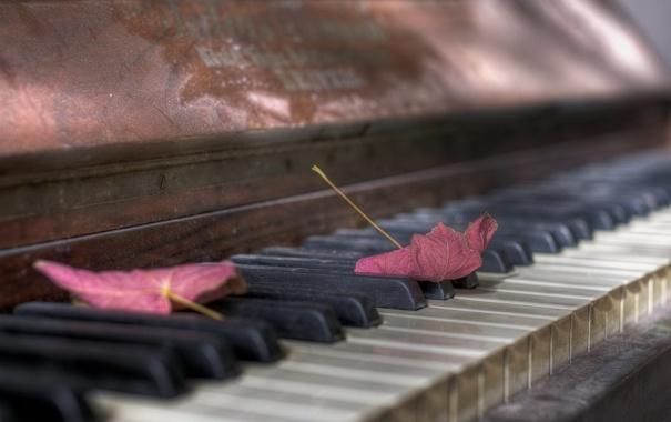 Фото обои листья, музыка, пианино