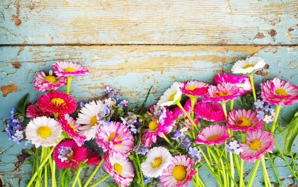 Цветы полевые-на рабочий стол