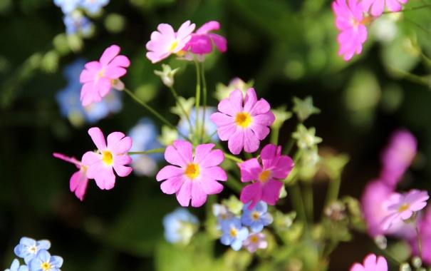 Фото обои макро, природа, лепестки, соцветие