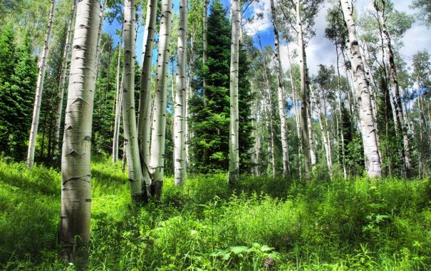 Фото обои зелень, лес, лето, трава, деревья