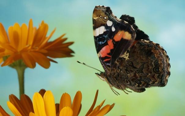 Фото обои цветок, полет, бабочка, разноцветные