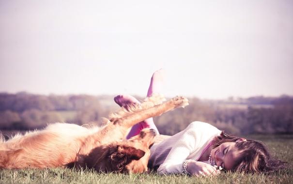 Фото обои лето, трава, девушка, радость, игра, собака