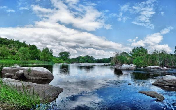 Фото обои лес, вода, отражение, река, камни, растительность