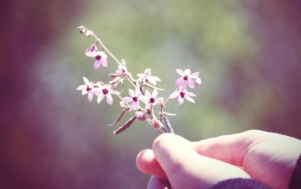 Фото обои цветок, макро, настроение, растение, рука, colours, macro