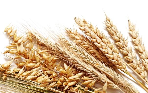 картинки для детей зерно