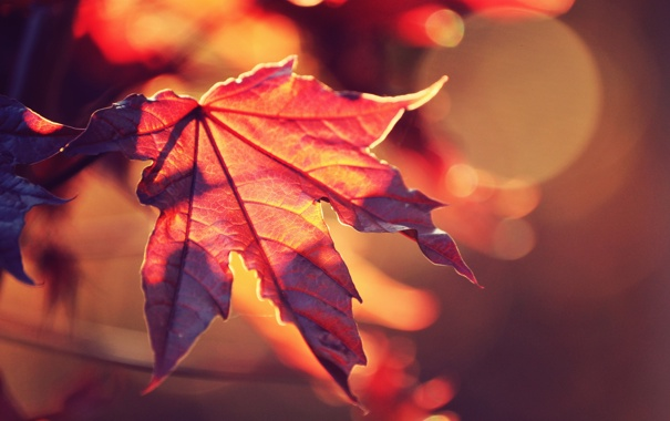 Фото обои осень, солнце, макро, свет, красный, природа, лист