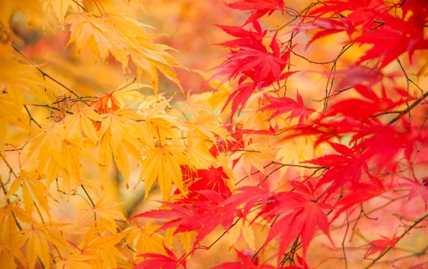 Фото обои осень, листья, природа, желтые, веточки
