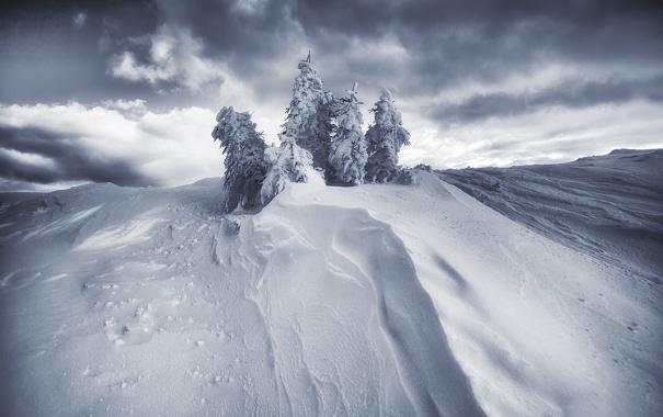 Фото обои снег, сугроб, ёлки