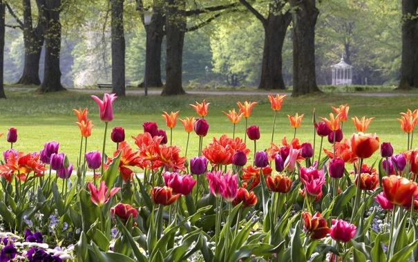 Фото обои цветы, парк, Германия, тюльпаны, клумба, Баден-Вюртемберг, Баден-Баден