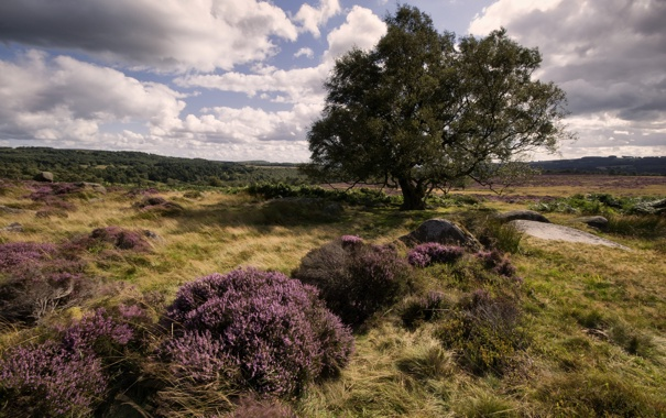 Фото обои поле, лето, пейзаж, природа