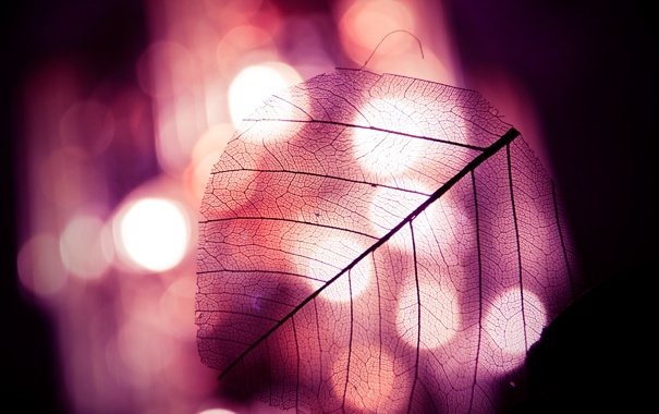 Фото обои огни, крыло, насекомого, Фотосинтез