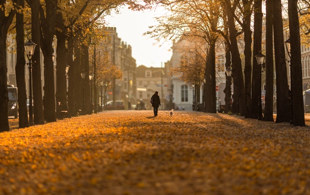 Фото обои Bokeh, Nederland, Hague, Autumn day