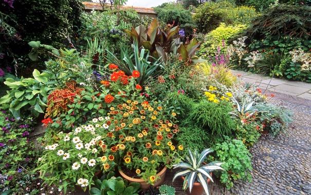 Фото обои цветы, сад, дорожка, кусты, бархатцы