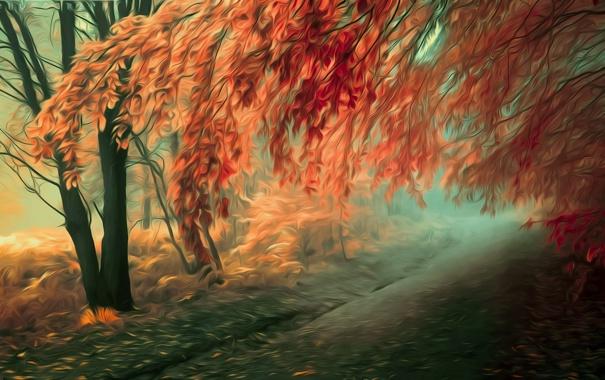 Фото обои дорога, осень, листья, деревья, ветви
