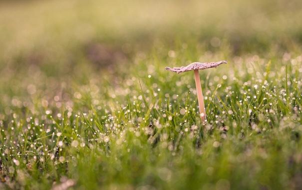 Гриб трава макро  № 1620626  скачать