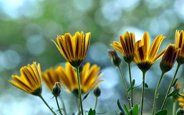 Фото обои капли, лепестки, цветы