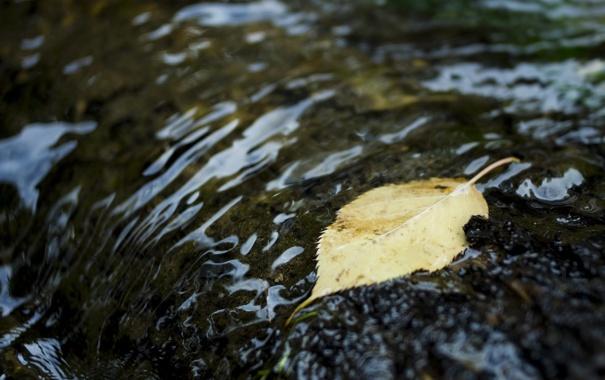 Фото обои осень, вода, макро, листок, рябь
