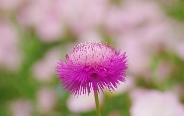 Фото обои цветок, макро, природа