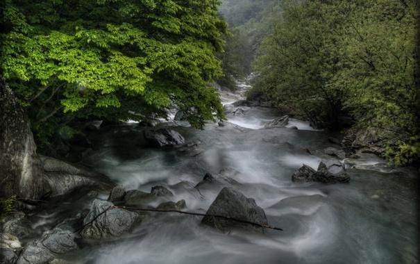 Фото обои лес, лето, природа, река, камни