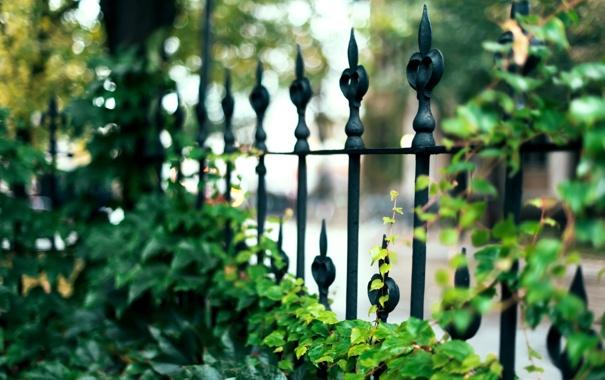 Фото обои листья, макро, природа, забор, ограда, ограждение, зеленые