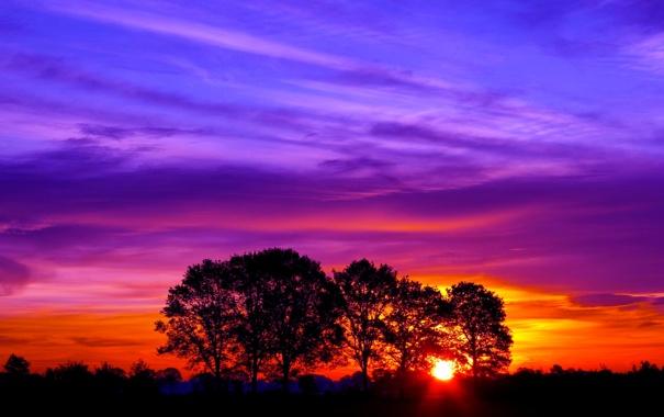 Фото обои небо, солнце, облака, деревья, пейзаж, закат, силуэт