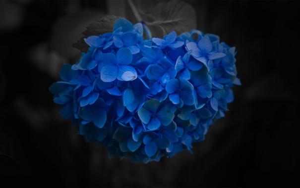 Фото обои макро, цветы, фото, фон, обои, картинки