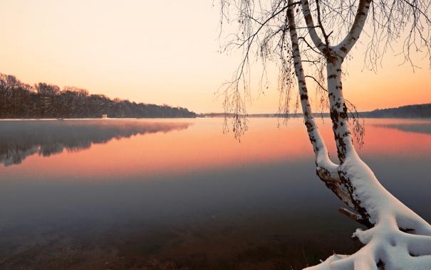 Фото обои зима, снег, озеро, дерево, берёза