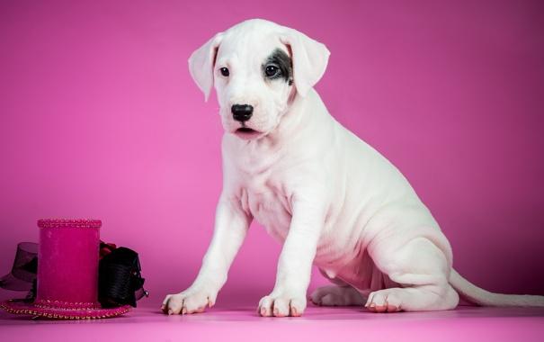 Фото обои фон, щенок, собака