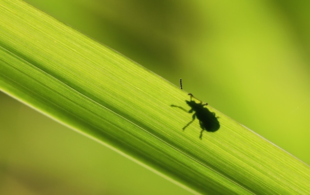Фото обои природа, лист, жук