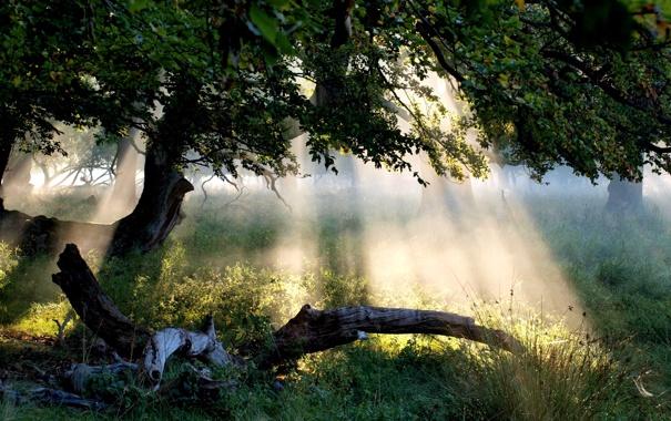 Фото обои лес, трава, листья, солнце, лучи, свет, пейзаж