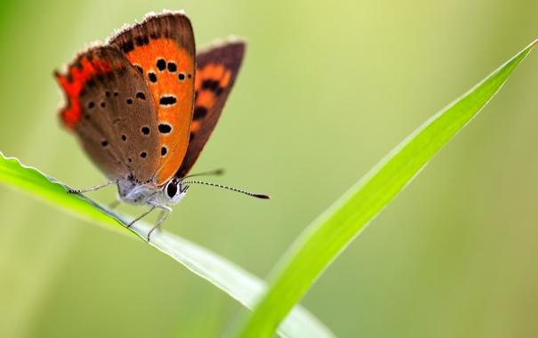 Фото обои природа, бабочка, фон