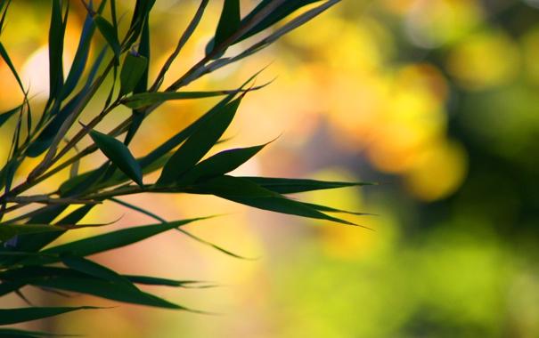 Фото обои листья, ветки, macro, bokeh, bamboo