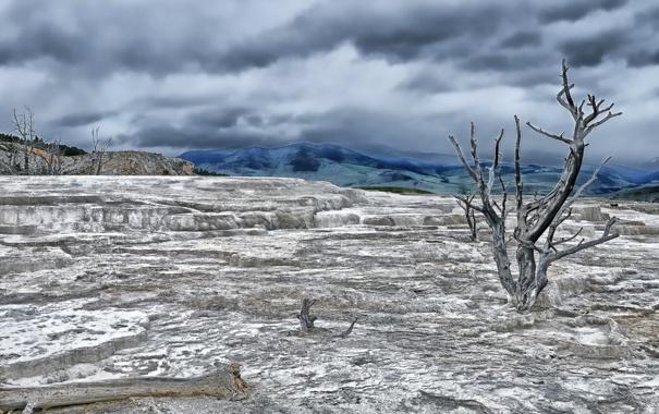 Фото обои Wyoming, Terrace Tree, Yellowstone National Park