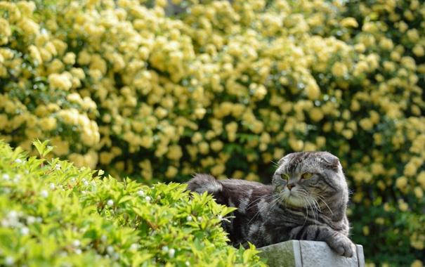 Фото обои зелень, кошка, кот, природа, кусты, лежа