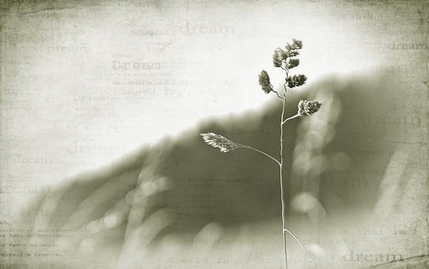 Фото обои трава, стиль, фон