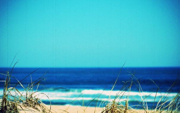Фото обои трава, природа, фото, пейзажи, пляжи