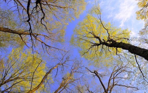 Фото обои осень, небо, листья, деревья