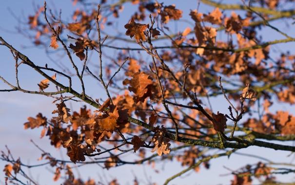 Фото обои осень, листья, красные