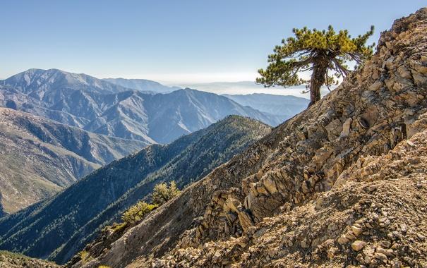 Фото обои камни, дерево, Природа