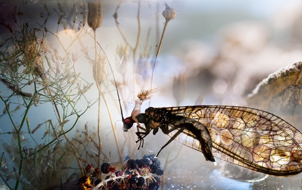 Фото обои dream, light, water, insect