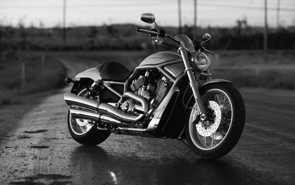 Фото обои мотоцикл, Harley Davidson, байк, мотор, чёрно-белый, харлей девидсон, v-rod