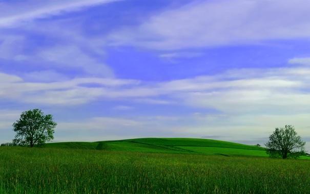 Фото обои поле, деревья, фото, пейзажи, поля