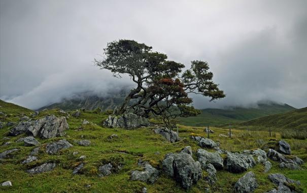 Фото обои камни, горы, туман, дерево