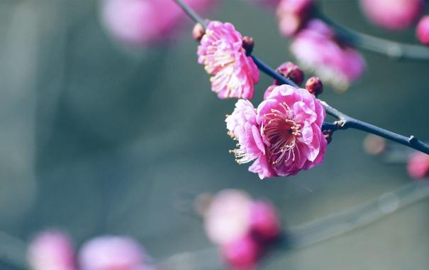Фото обои цветок, веточка, бутон, лепесток