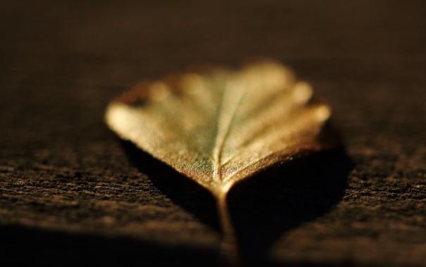 Фото обои осень, макро, природа, листок