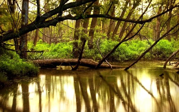 Фото обои вода, деревья, природа, река, красота, леса, реки