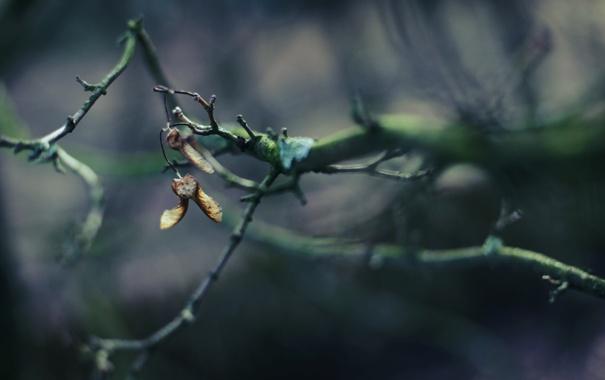 Фото обои лес, ветки, природа, фото, фон, ветви, обои
