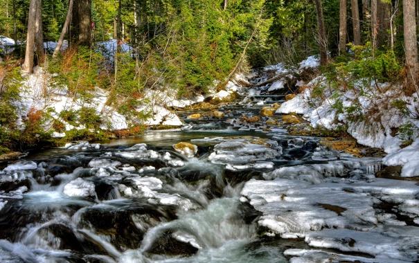 Фото обои лес, снег, деревья, река, ручей, камни, поток